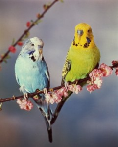 Питание и пищеварение у птиц